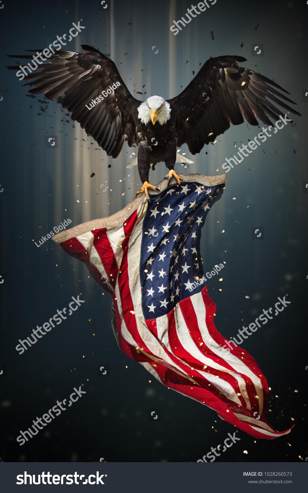 American bald eagle flying symbol america stock photo 1028260573 american bald eagle flying symbol of america with flag united states of america buycottarizona Choice Image