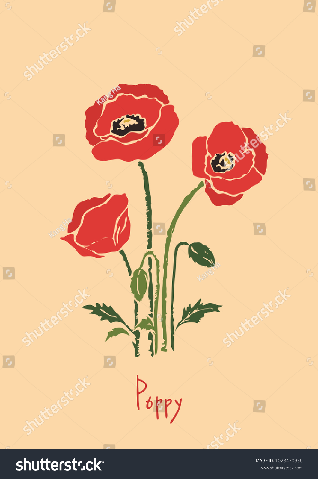 Vector Illustration Poppy Flowers Illustration Color Stock Vector