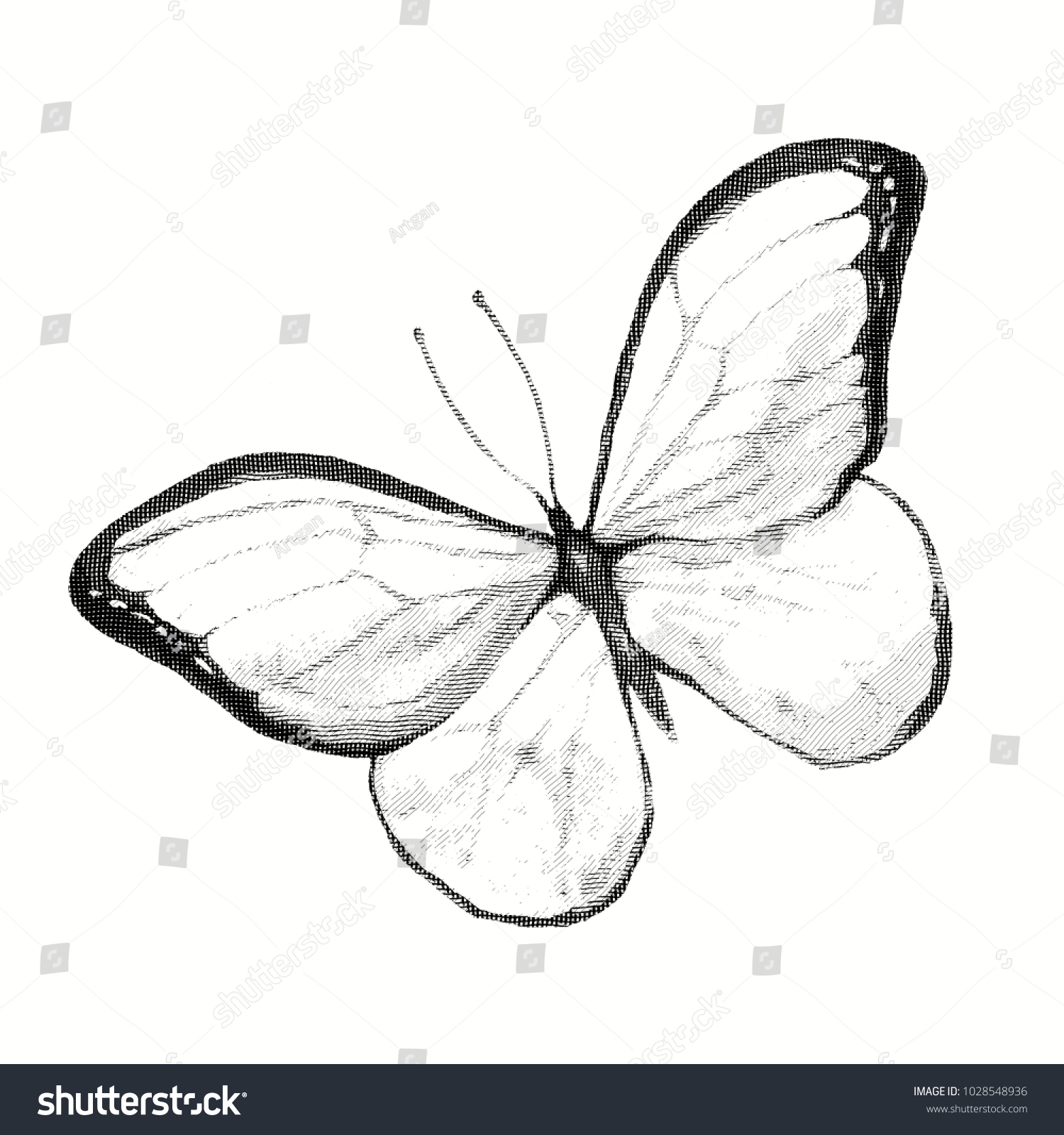 Engraving a butterfly pencil drawing of an insect isolated illustration of an animal in