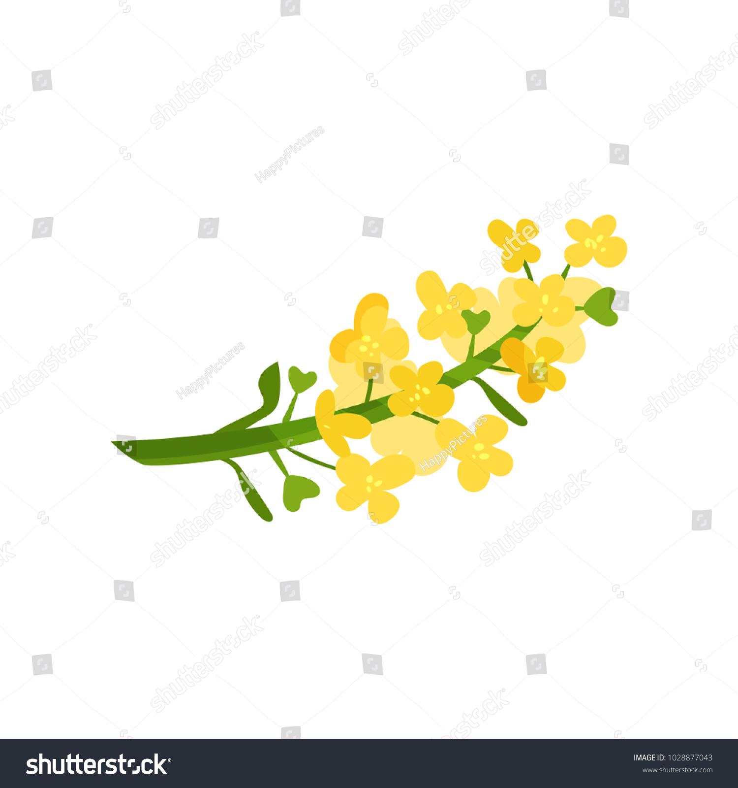 Cartoon Illustration Of Small Yellow Flowers On Green Stalk Wild