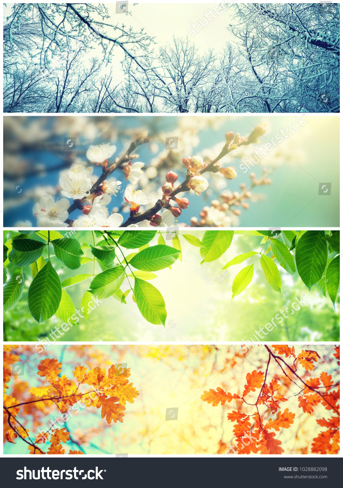 Four seasons. A pictures that shows four different pictures representing the four seasons: Spring, summer, autumn and winter #1028882098