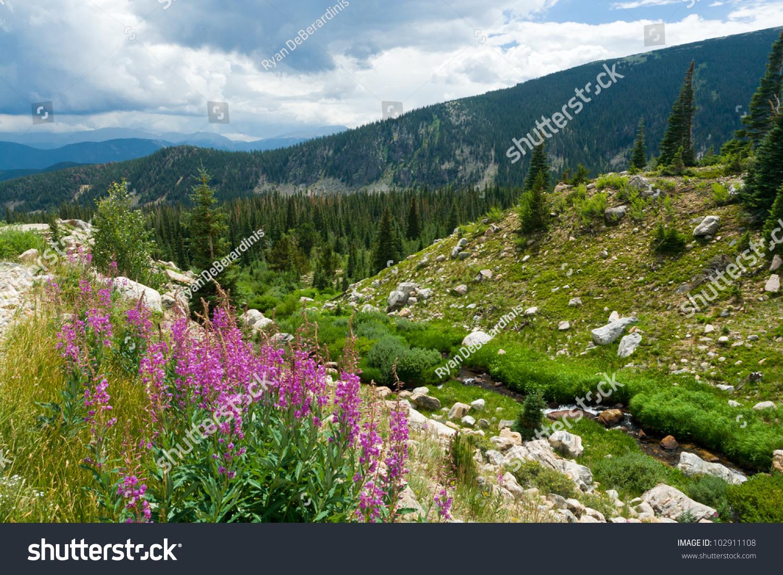 Colorado Mountain Landscape Summer Wild Flowers Stock ...