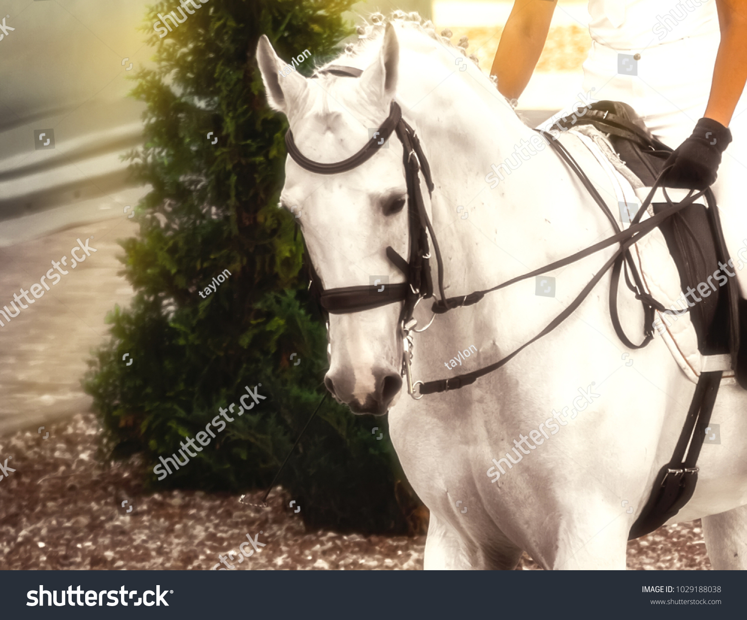 White Female Horse Harness - WIRE Center •