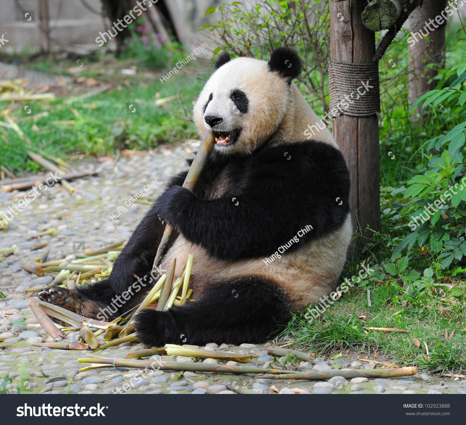how to draw a panda eating bamboo