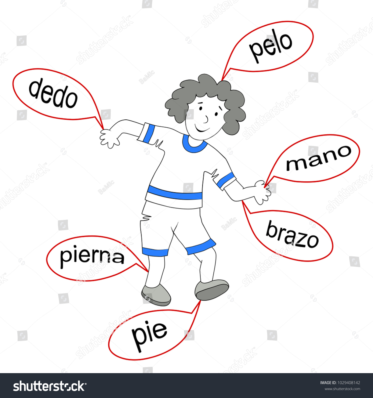Body Parts Spanish Drawing Boy Basic Stock Vector Royalty Free