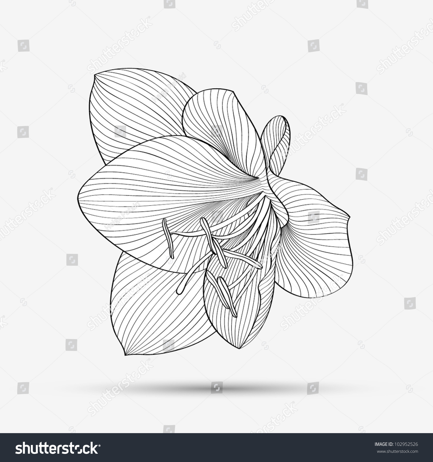 Handdrawing Abstract Floral Background Vector Flower Amaryllis Element For  Design Flowers Rose Flower Drawing How
