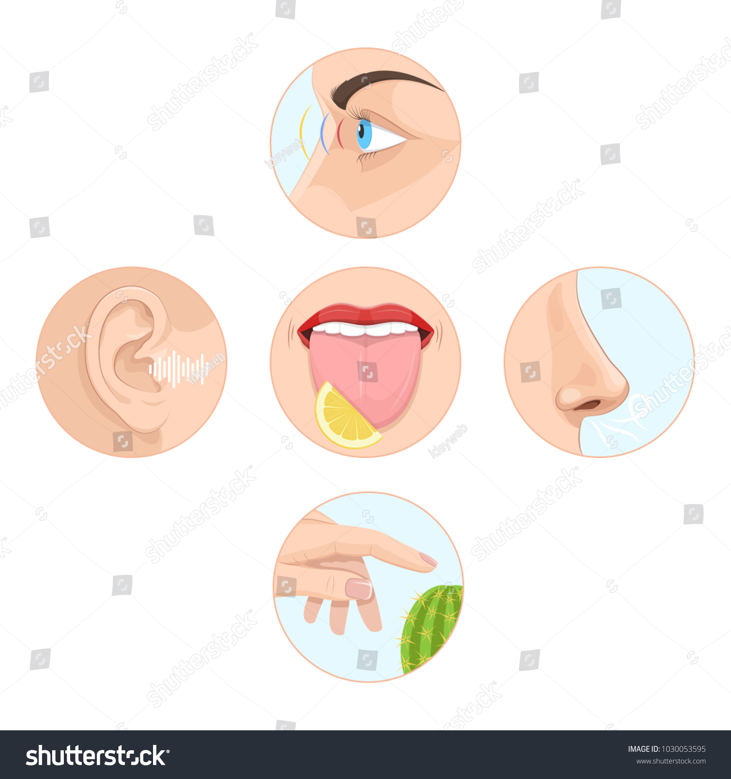 Set Five Senses Man Anatomy Human Stock Vektorgrafik Lizenzfrei