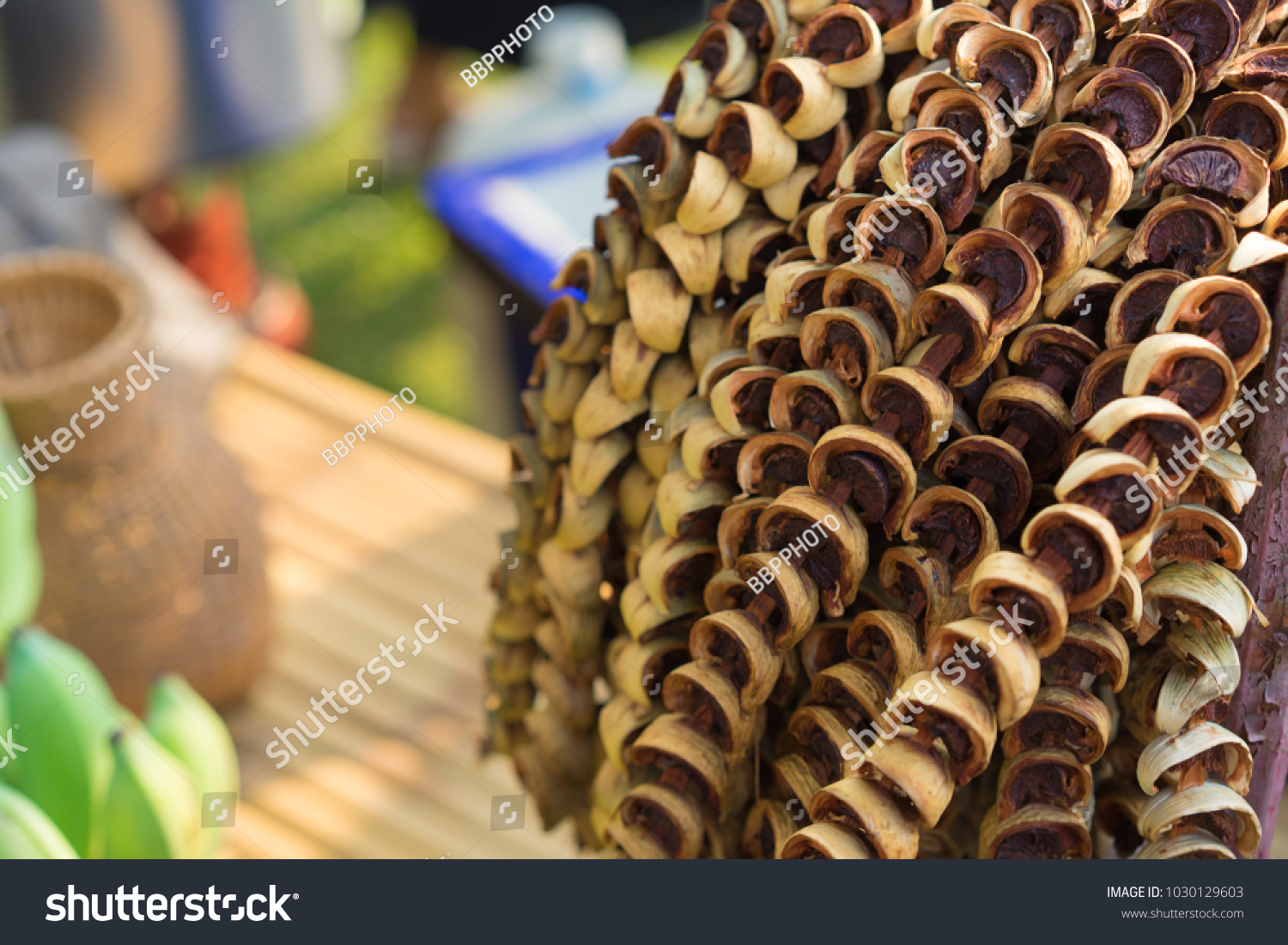 Areca Nut Betel Nut After Dried Stock Photo (Edit Now) 1030129603