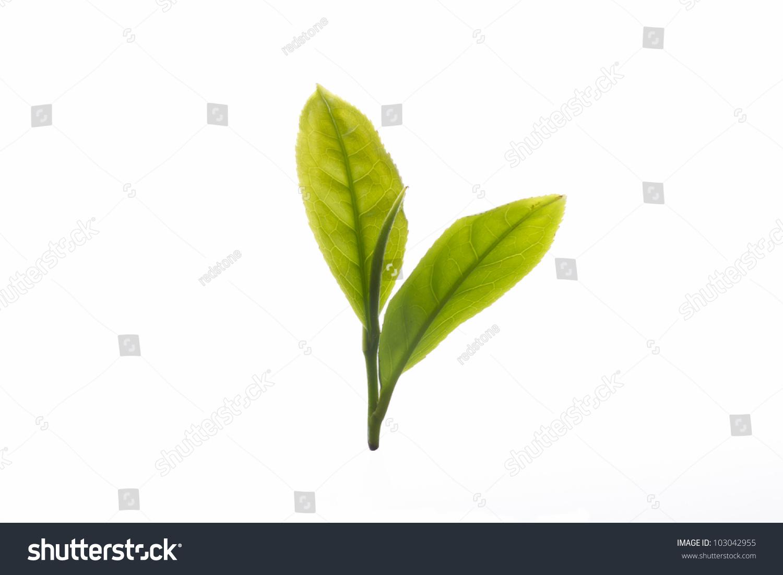Чайные листья сток вектор стоковая фотография