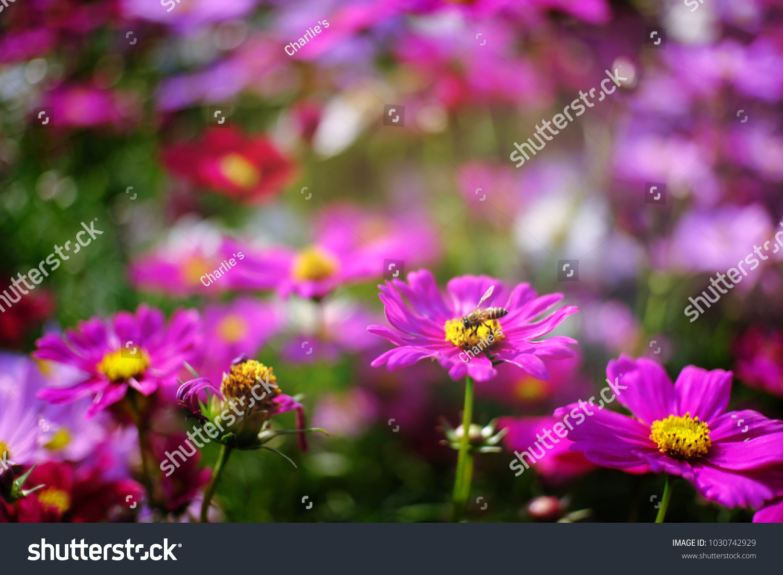Beautiful Nature Pinks Flower In Nature Garden Ez Canvas