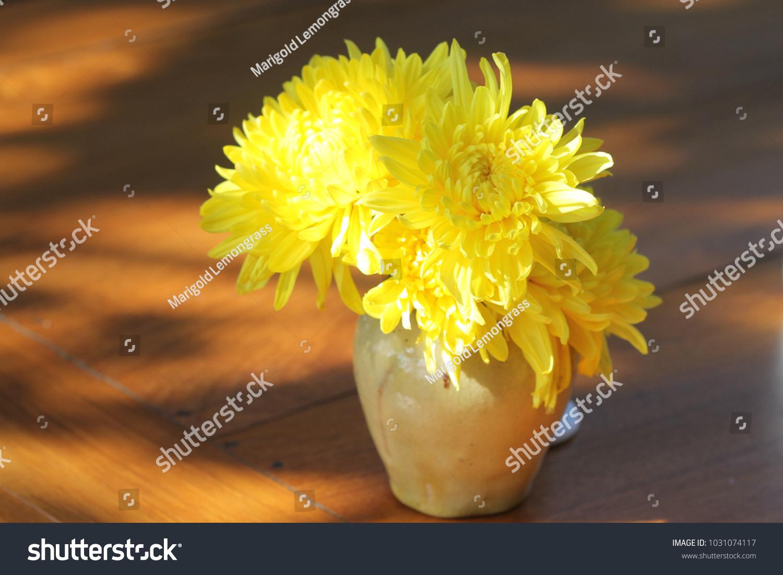 Beautiful Yellow Flower Vasmaybe Garberahonecombvery Pretty Stock