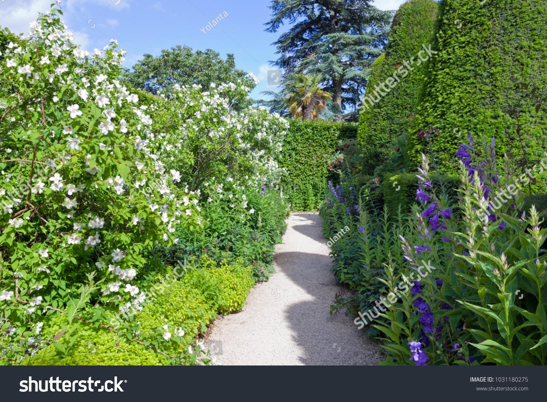 Garden Path Between Yew Topiary Trees Stock Photo Edit Now