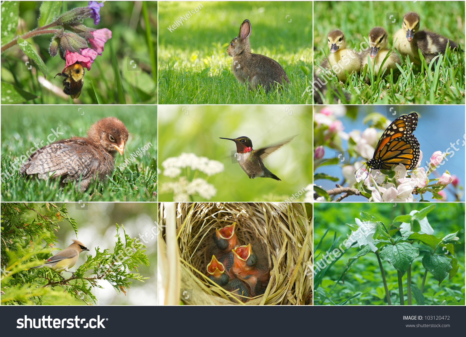 Image result for animals in Spring