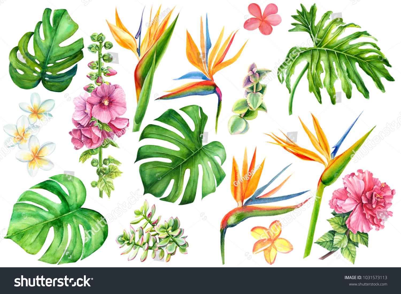 Set Tropical Plants Flowers On White Stock Illustration 1031573113