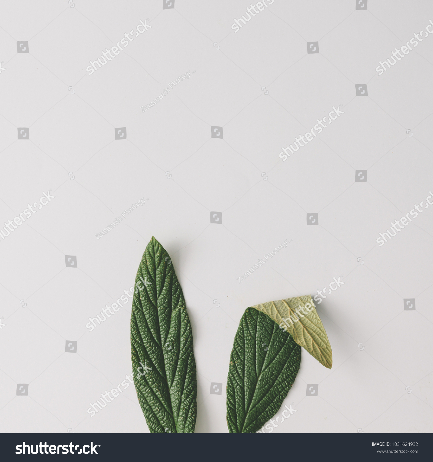 Bunny rabbit ears made of natural green leaves on bright background. Easter minimal concept. Flat lay. #1031624932