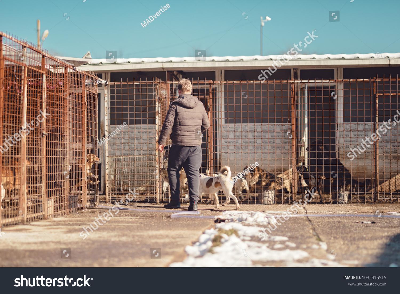 899e3a1ecad Man Brings Dog Street Dog Shelter Stock Photo (Edit Now) 1032416515 ...