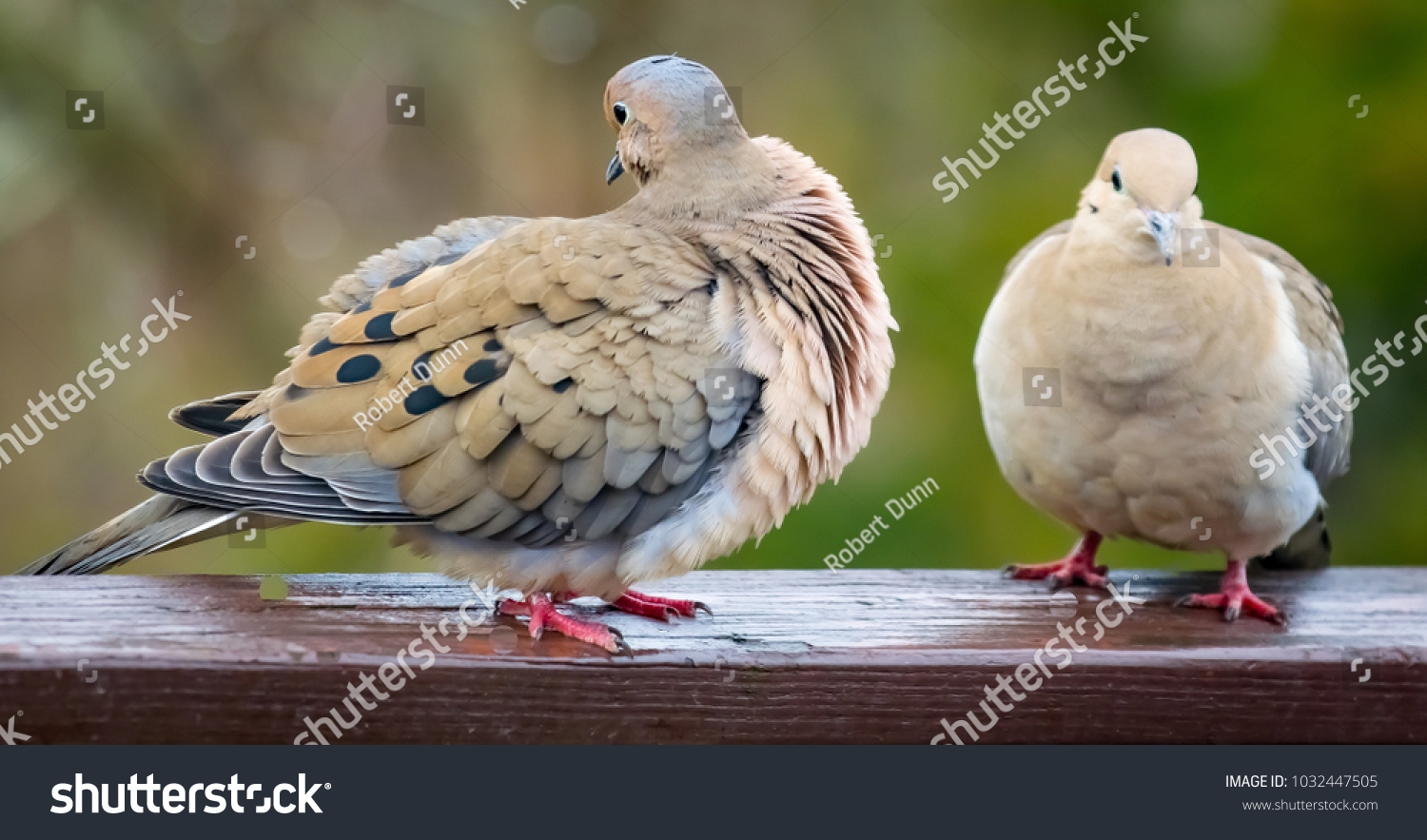 2 doves symbolism image collections symbol and sign ideas 2 doves symbolism image collections symbol and sign ideas 2 doves symbolism gallery symbol and sign biocorpaavc