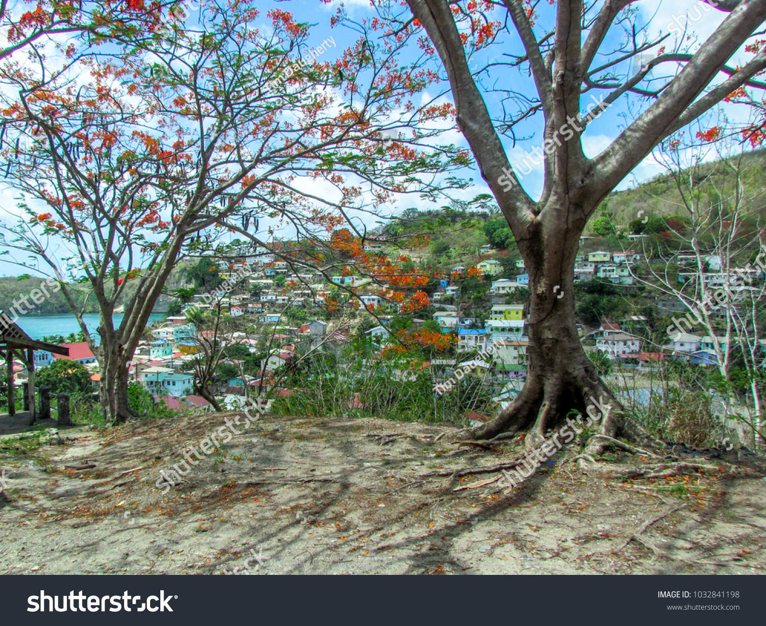 Local homes peak through small blooming trees on st lucia island caribbean