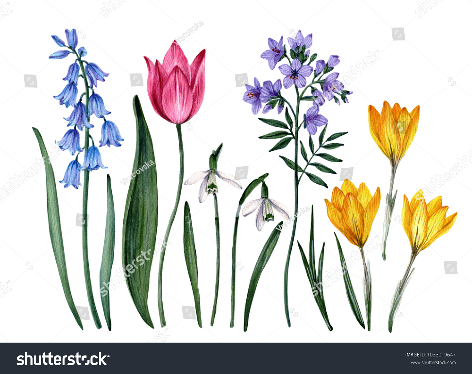 Watercolor Botanical Illustrations Spring Flowers Clip Stock