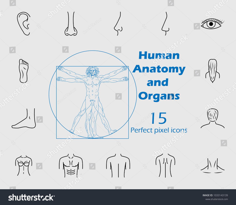 Human Anatomy Icon Set Premium Quality Stock Vector Royalty Free