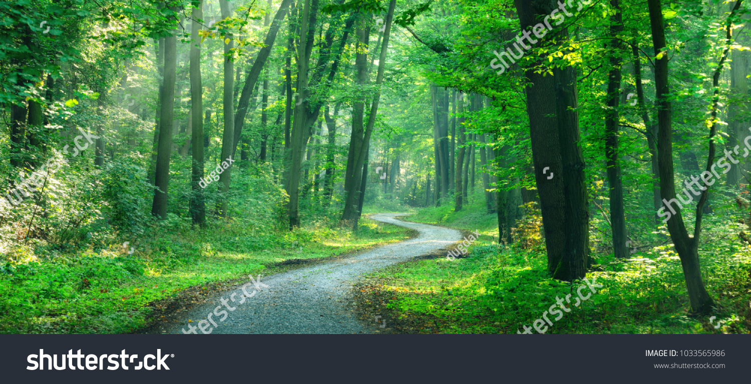 Winding gravel road through sunny green Forest illuminated by sunbeams through mist