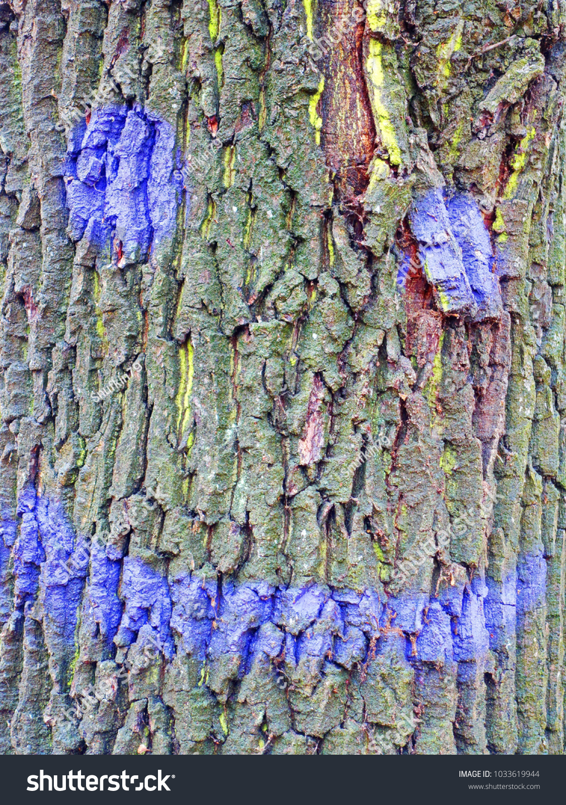 Bark Oak Tree Paint Natural Expressionism Stock Photo (Edit Now ...