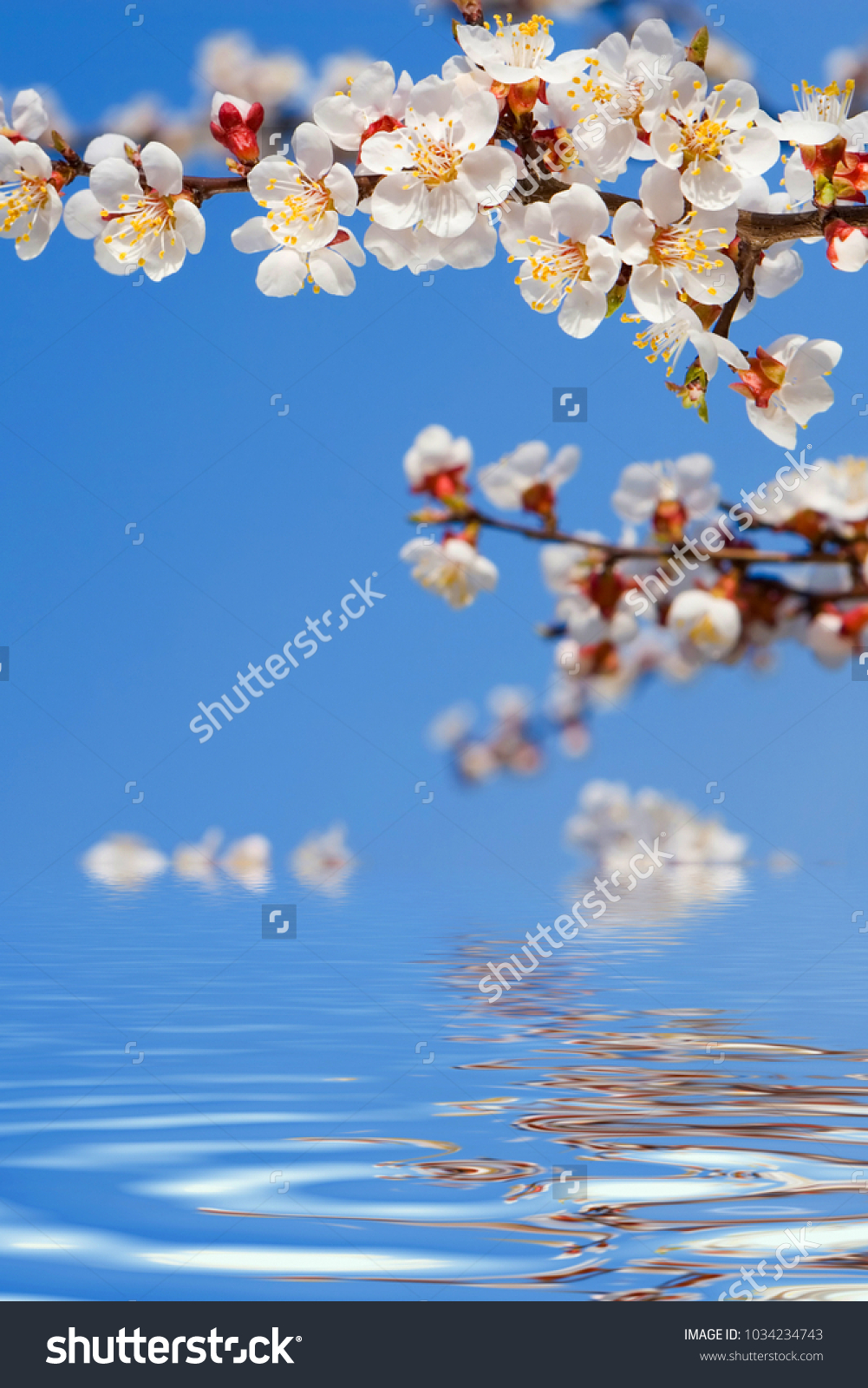 Spring beauty blooming flowers trees on stock photo 1034234743 blooming flowers of trees on the blue sky background and water izmirmasajfo