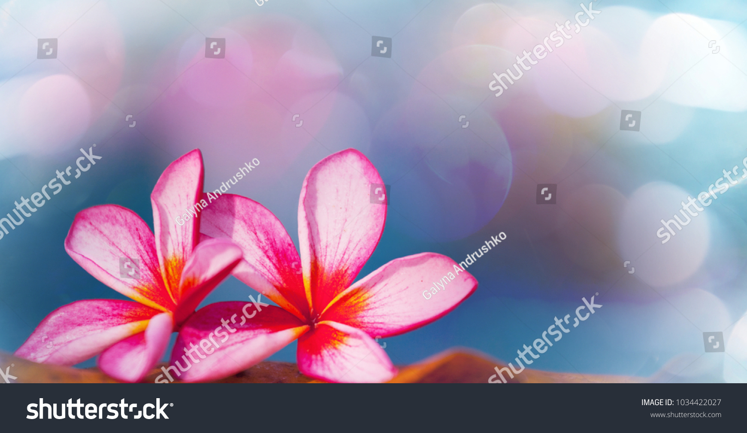 Tropical flowers hawaiian garden stock photo 1034422027 shutterstock tropical flowers in hawaiian garden izmirmasajfo Gallery