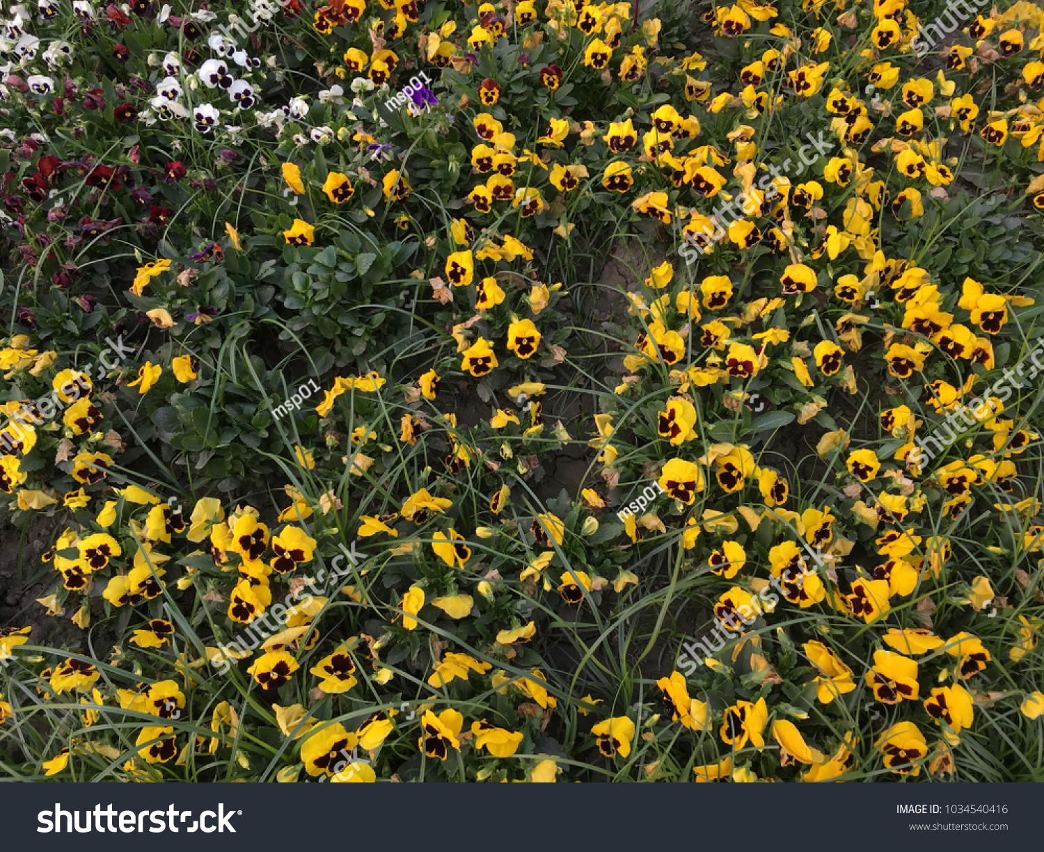 Yellow Colour Flower Bloomed Garden Stock Photo Edit Now