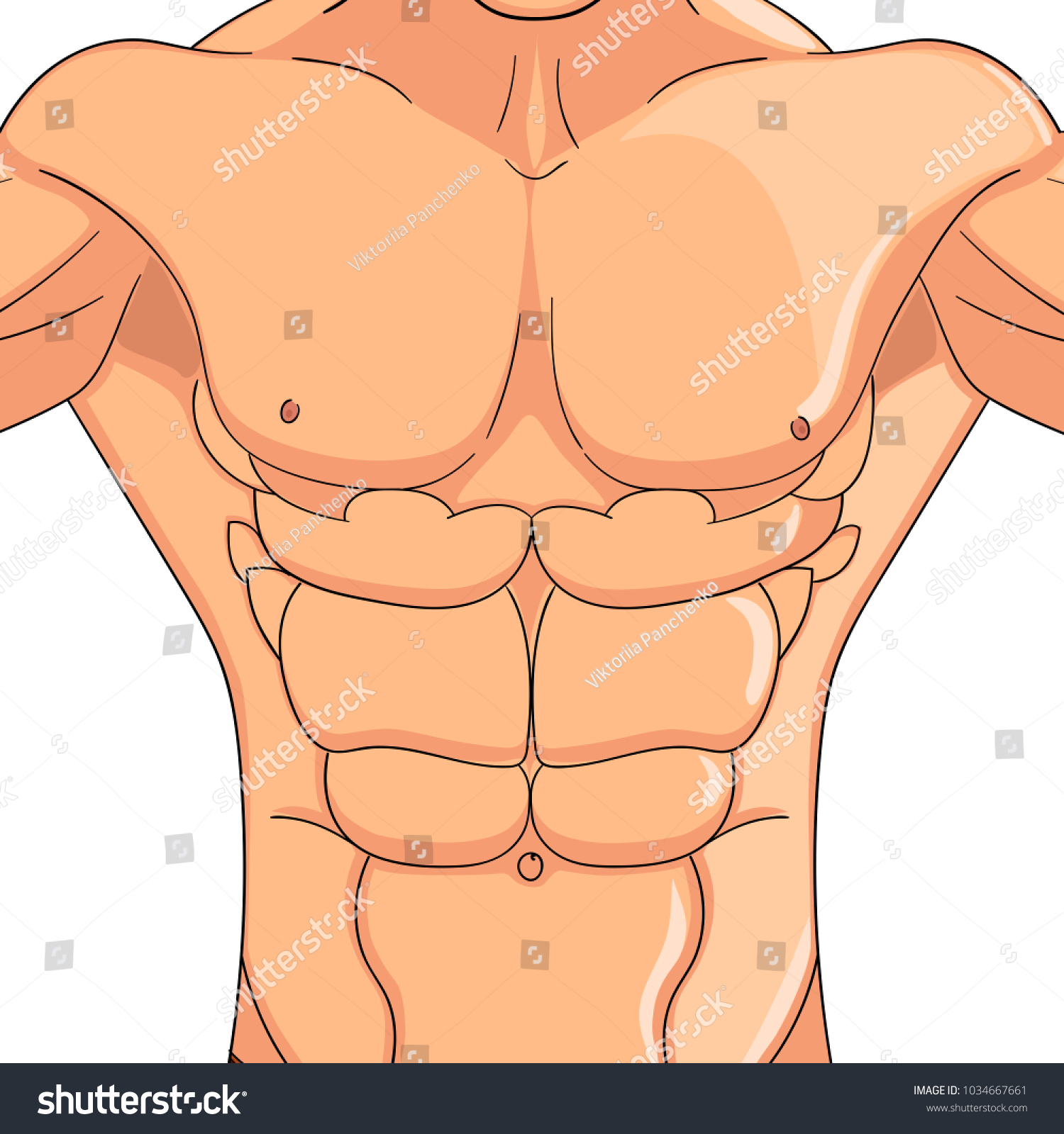 Male Press Body Athlete Bodybuilder Anatomy Stock Vector 1034667661
