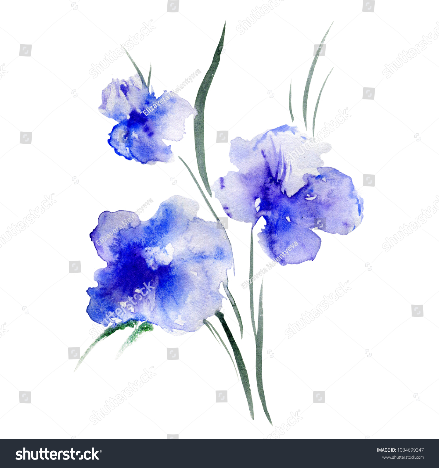 Watercolor Blue Poppy Flower Isolated On White Background Hand