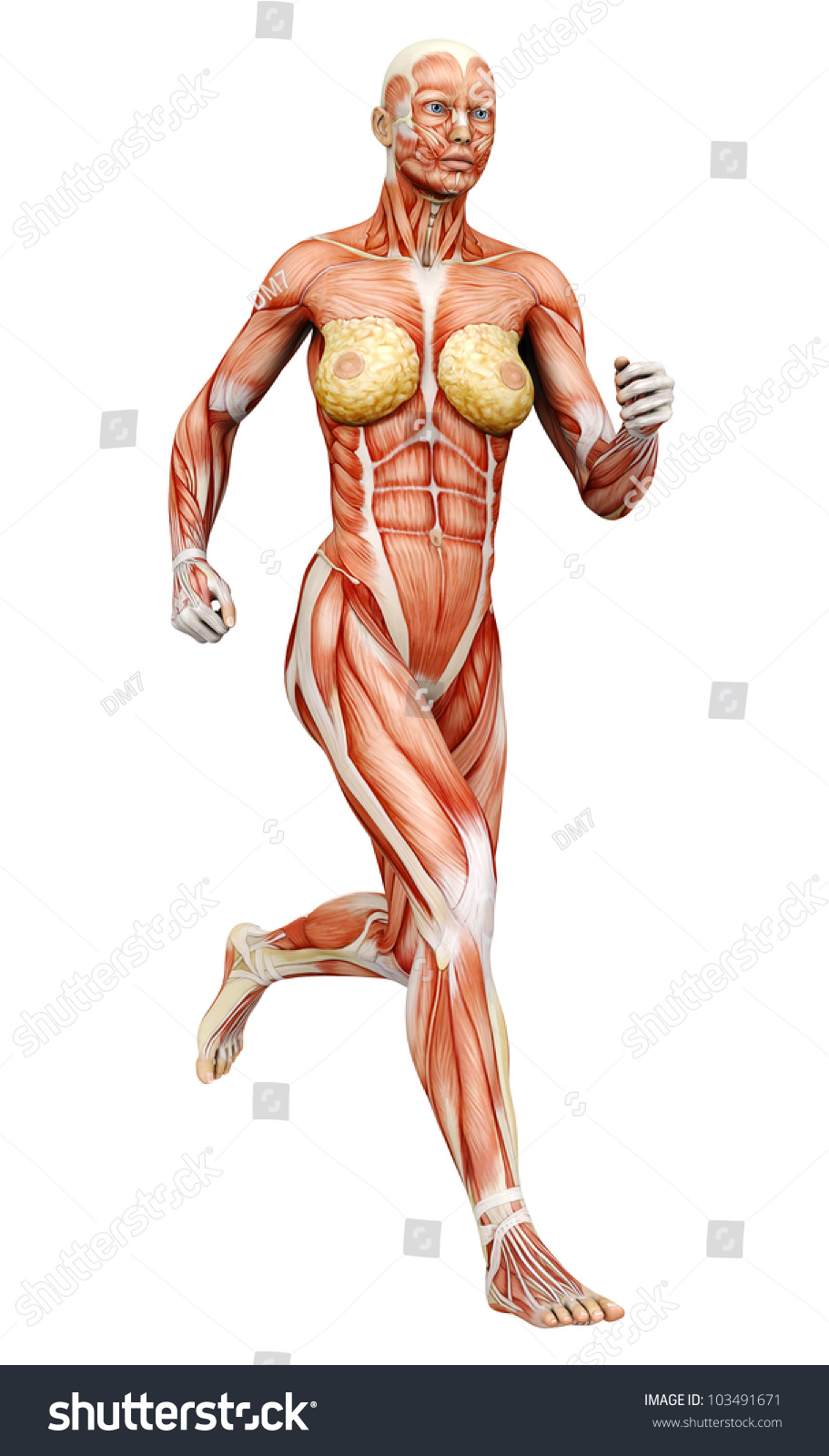 muscle woman running side view stock illustration 103491671, Muscles