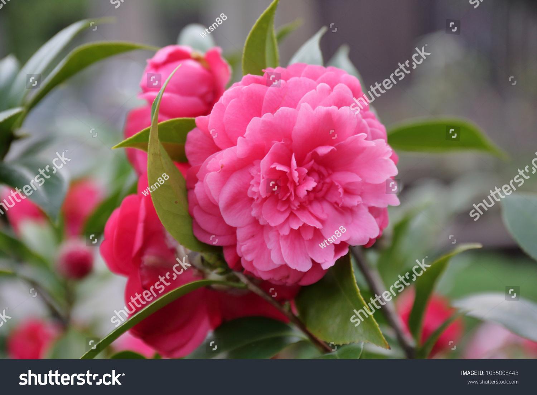 Euphorbia Flowers Red Ez Canvas