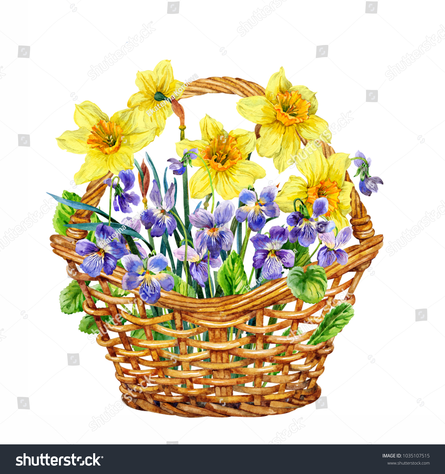 Daffodils Violets Basket Spring Flowers Watercolor Stock