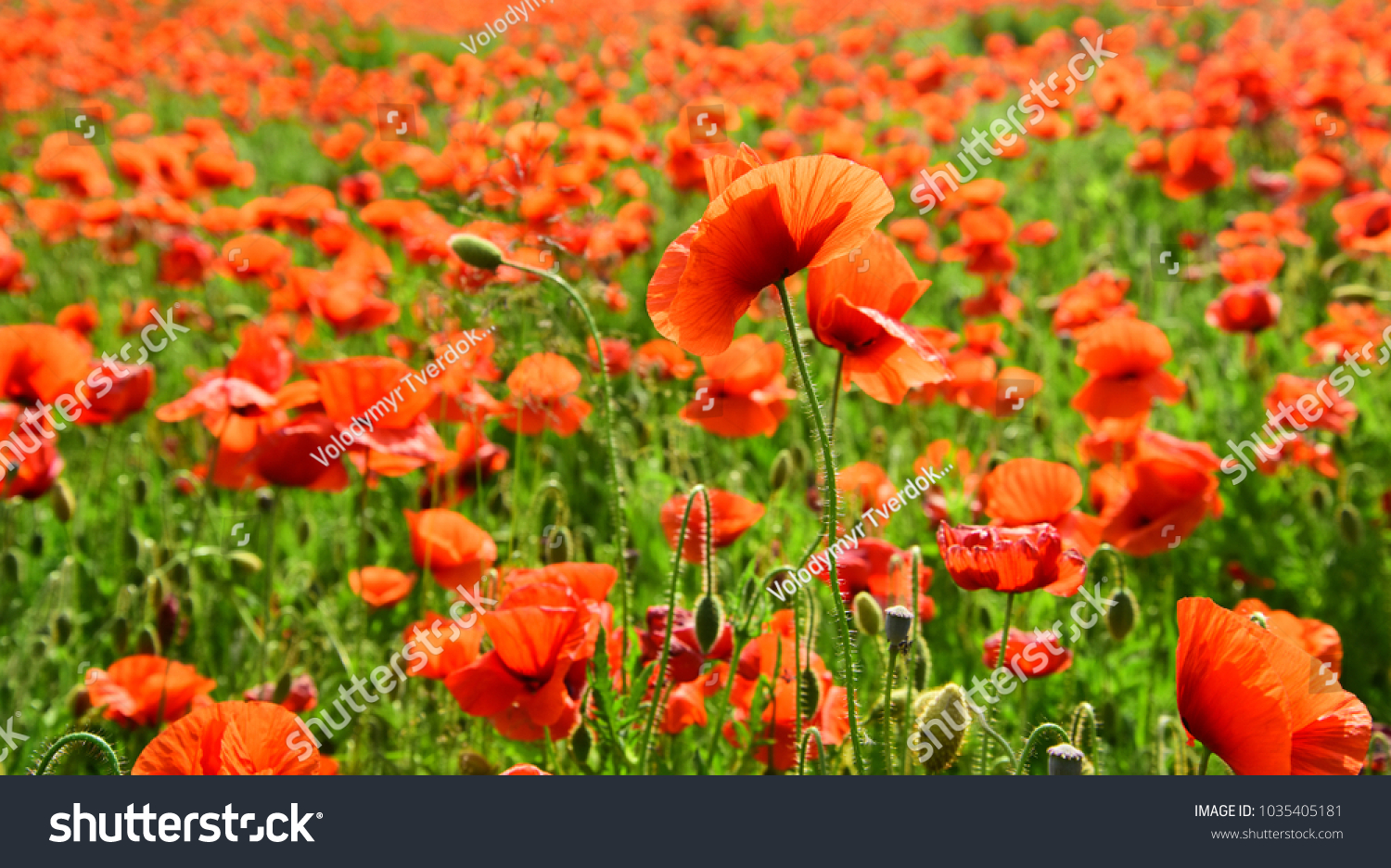 Remembrance Day Anzac Day Serenity Drug Stock Photo Royalty Free