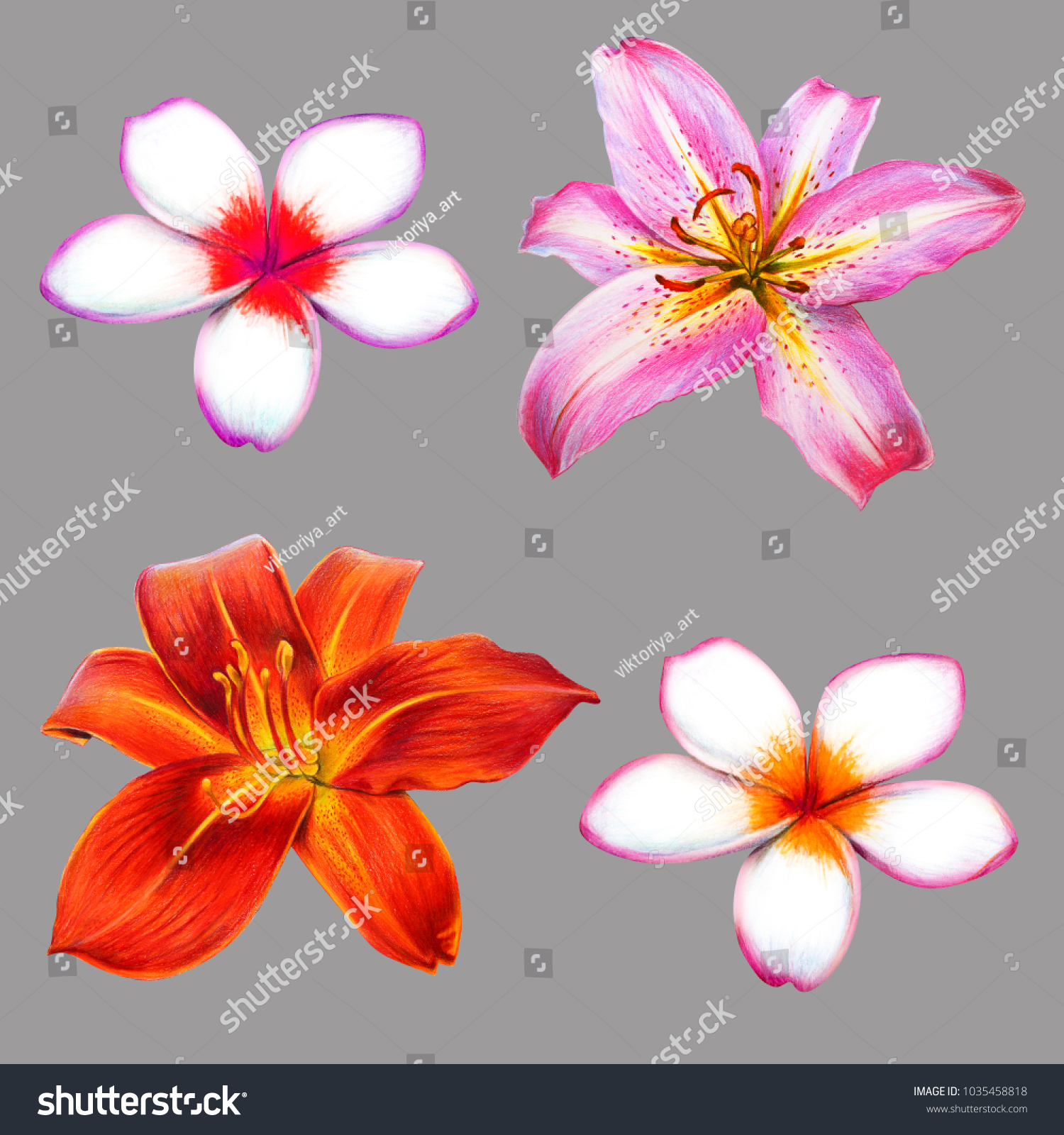 Royalty Free Stock Illustration Of Red Pink Lily Small White Flowers