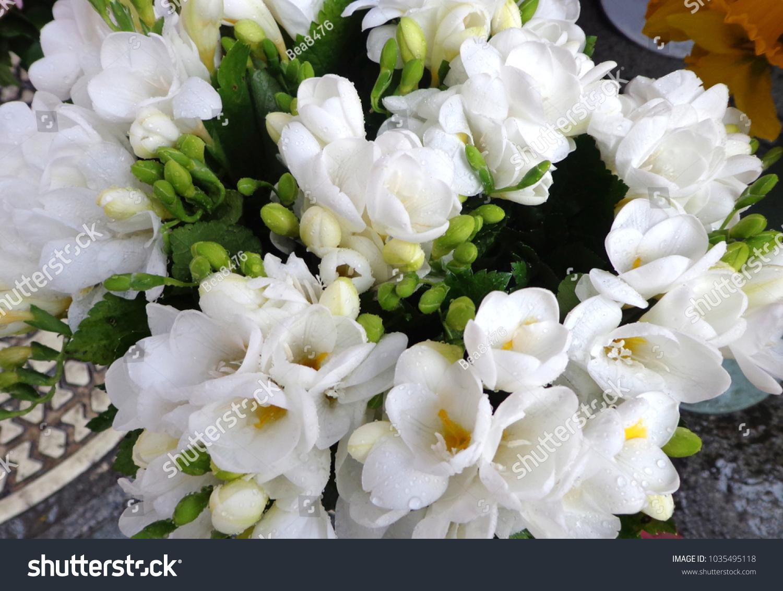 White Freesias Fragrant Spring Flowers Bouquet Stock Photo Royalty
