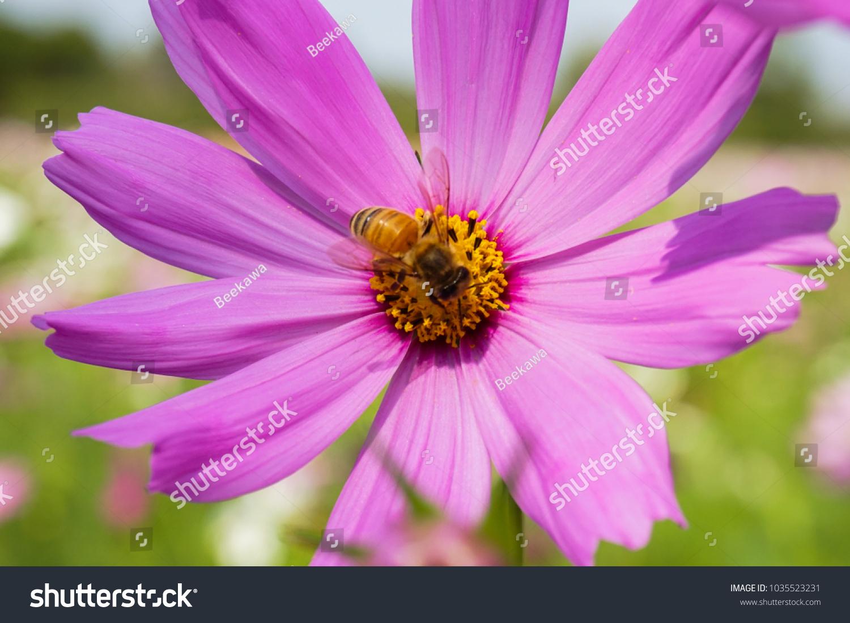 Pink flower ez canvas mightylinksfo