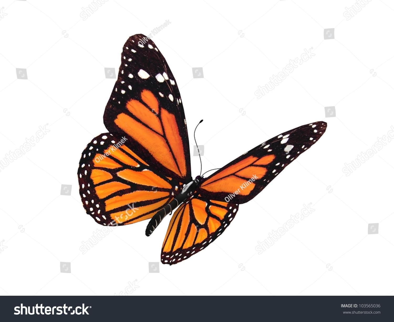 digital render monarch butterfly stock illustration 103565036