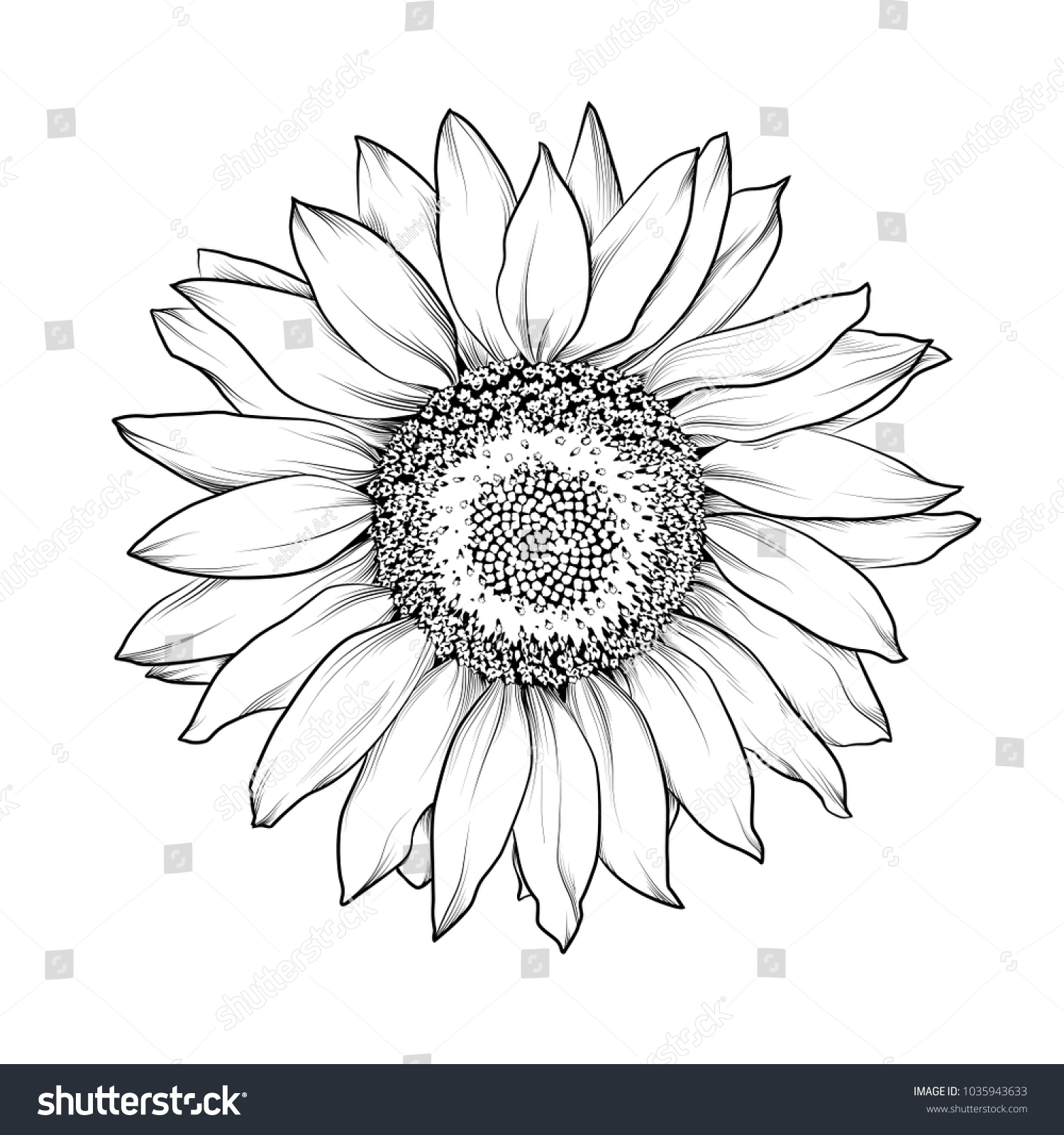 Sunflower isolated on white.