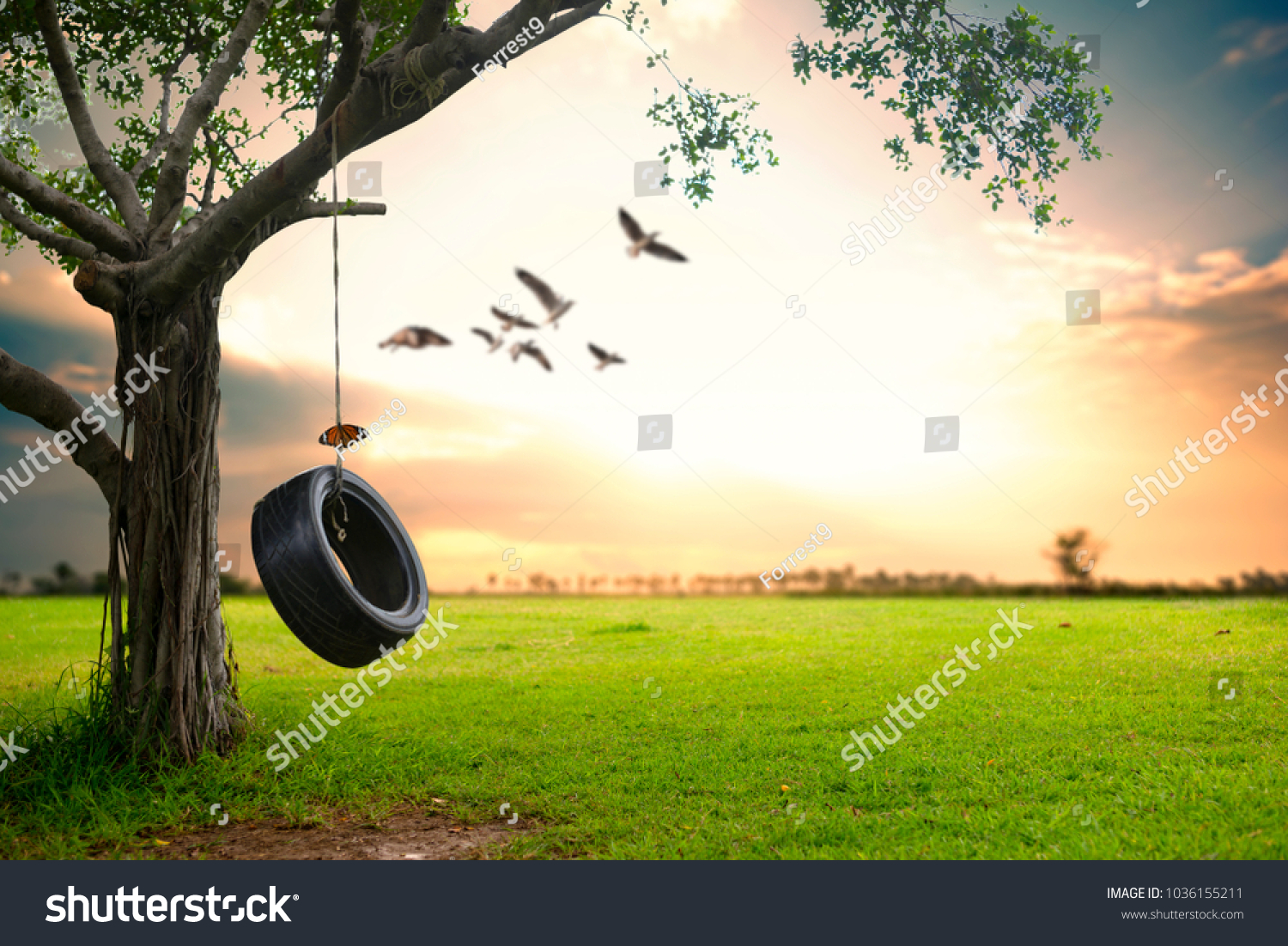 Beautiful Nature Background Hanging Rubber Tire Stock Photo Edit Now 1036155211