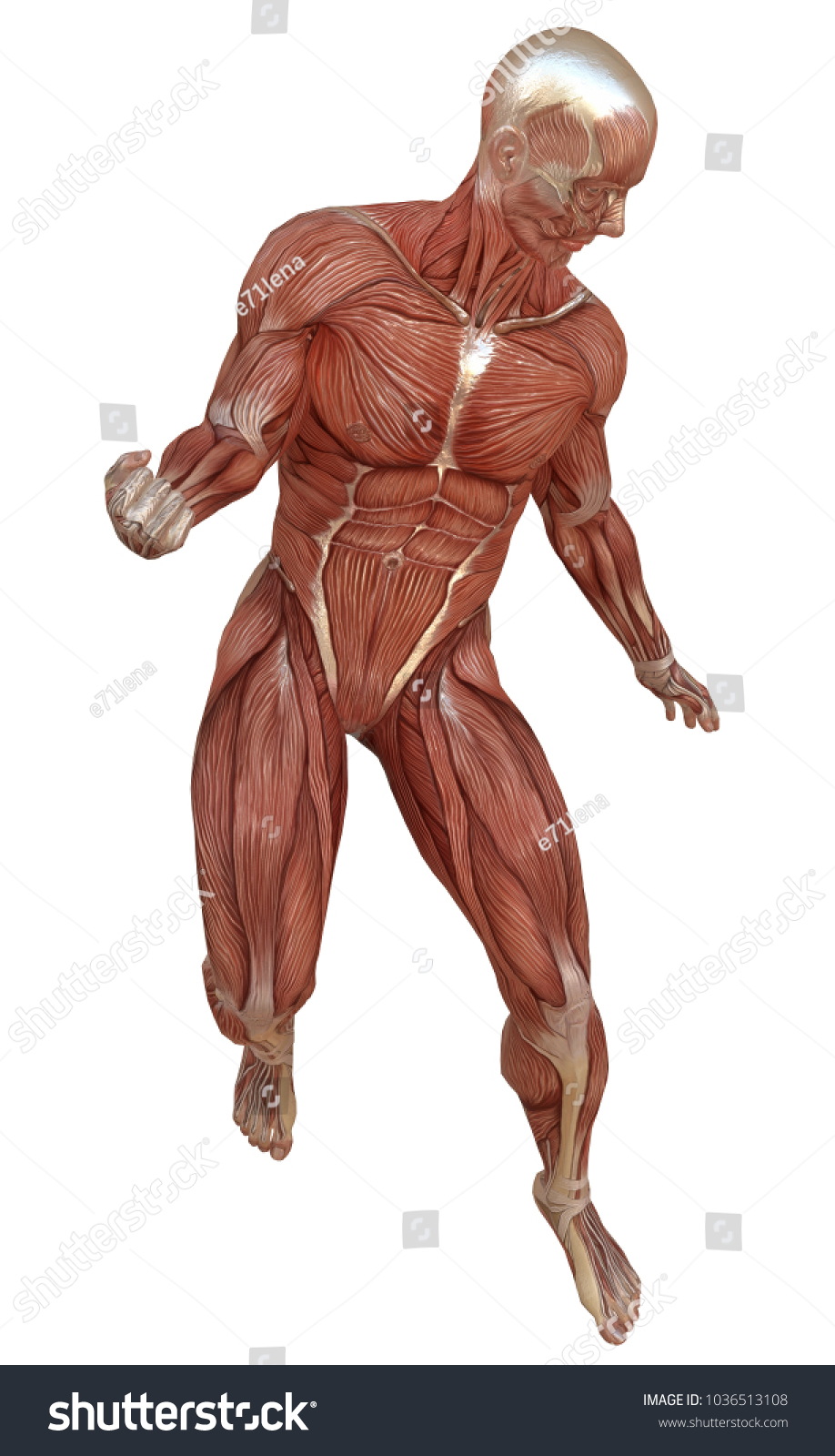 Male Body Without Skin Anatomy Muscles Stock Illustration - Royalty ...