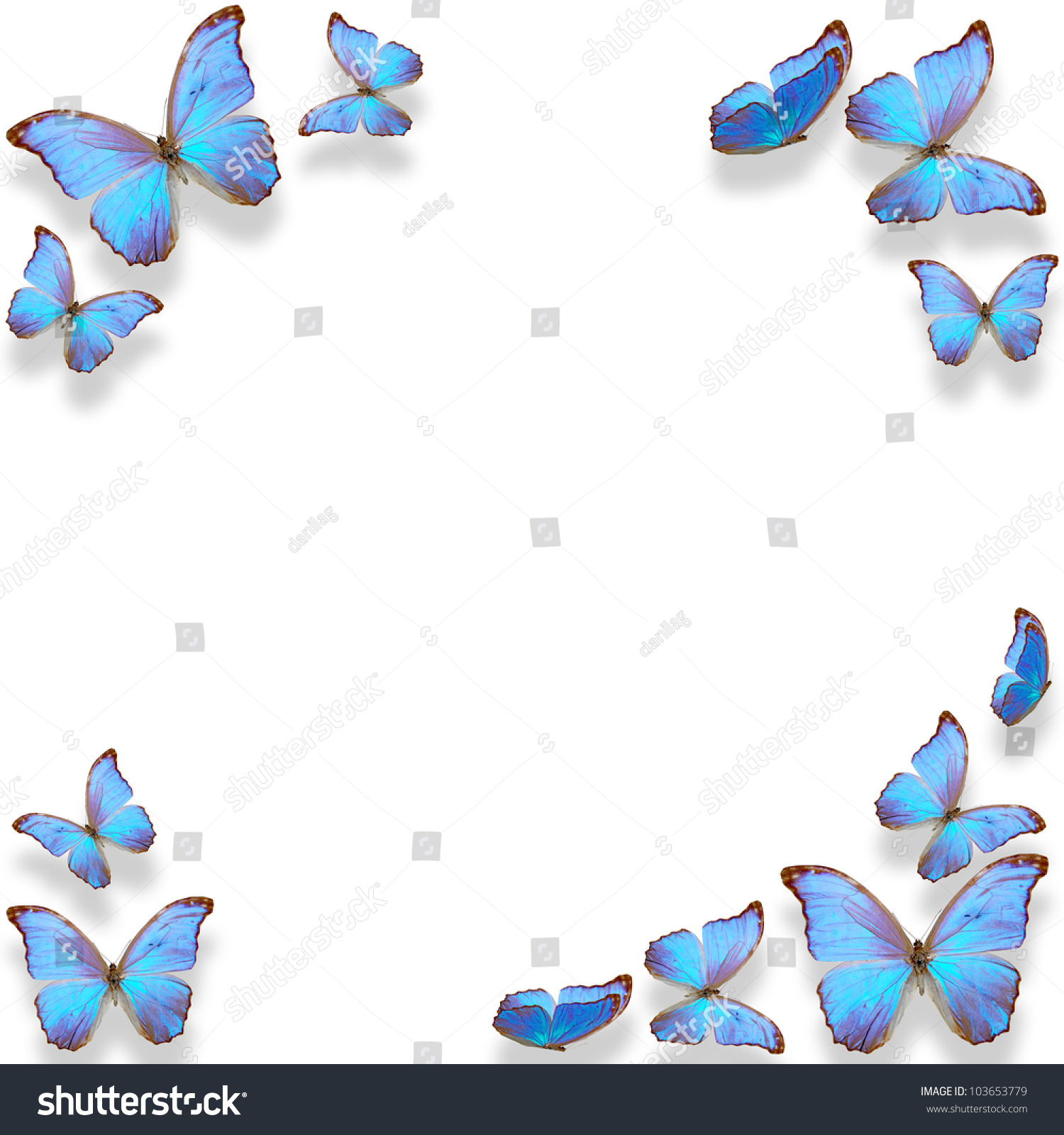 frame of blue butterfly on white background