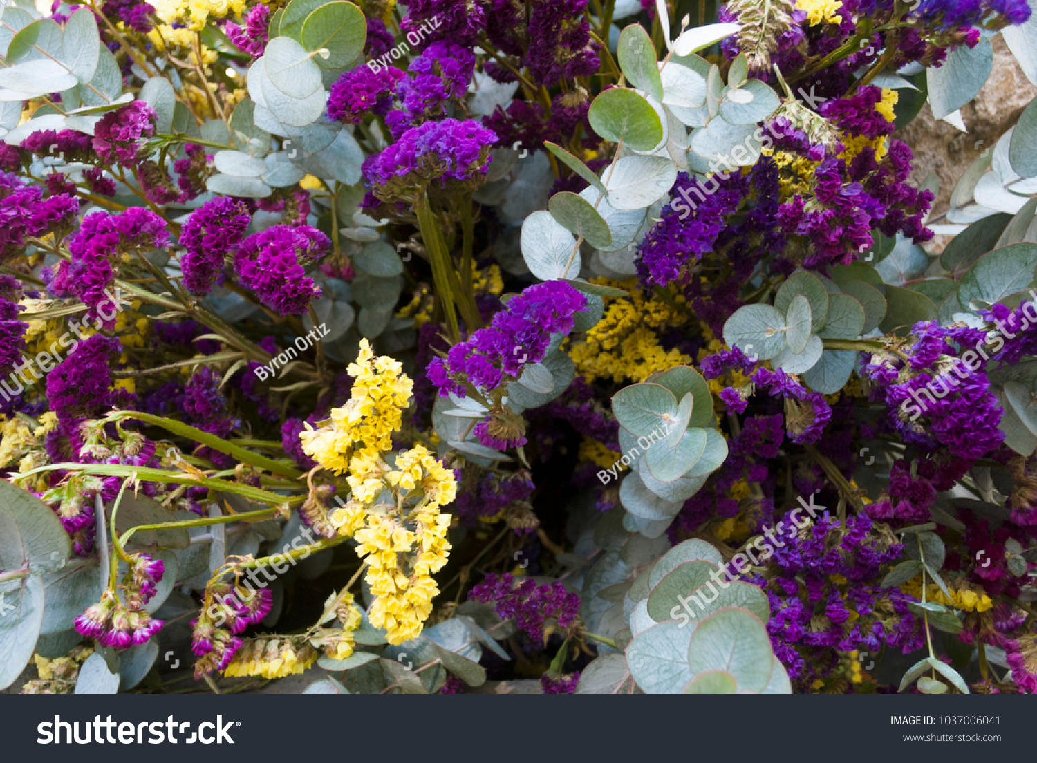 Bunch Of Purple Flowers Still Life In Guatemala Beautiful Detail