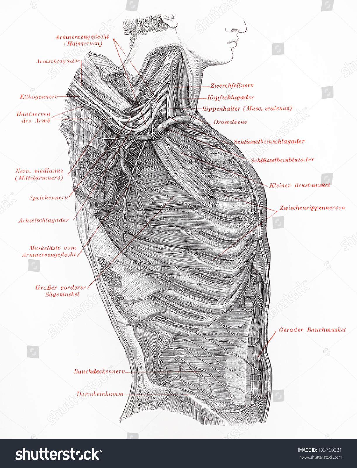 Wunderbar Anatomie Der Knöchel Sehnen Bilder - Menschliche Anatomie ...