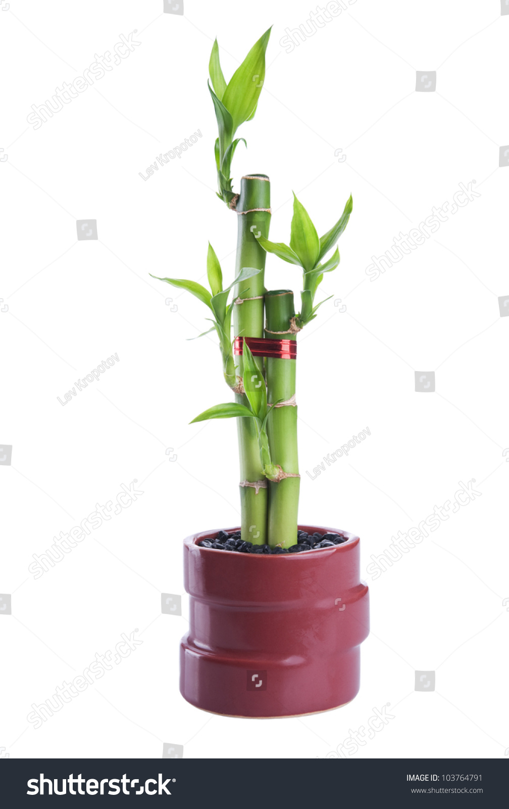 Chinese lucky bamboo red ribbon happiness stock photo 103764791 chinese lucky bamboo with red ribbon happiness symbol isolated on a white background reviewsmspy