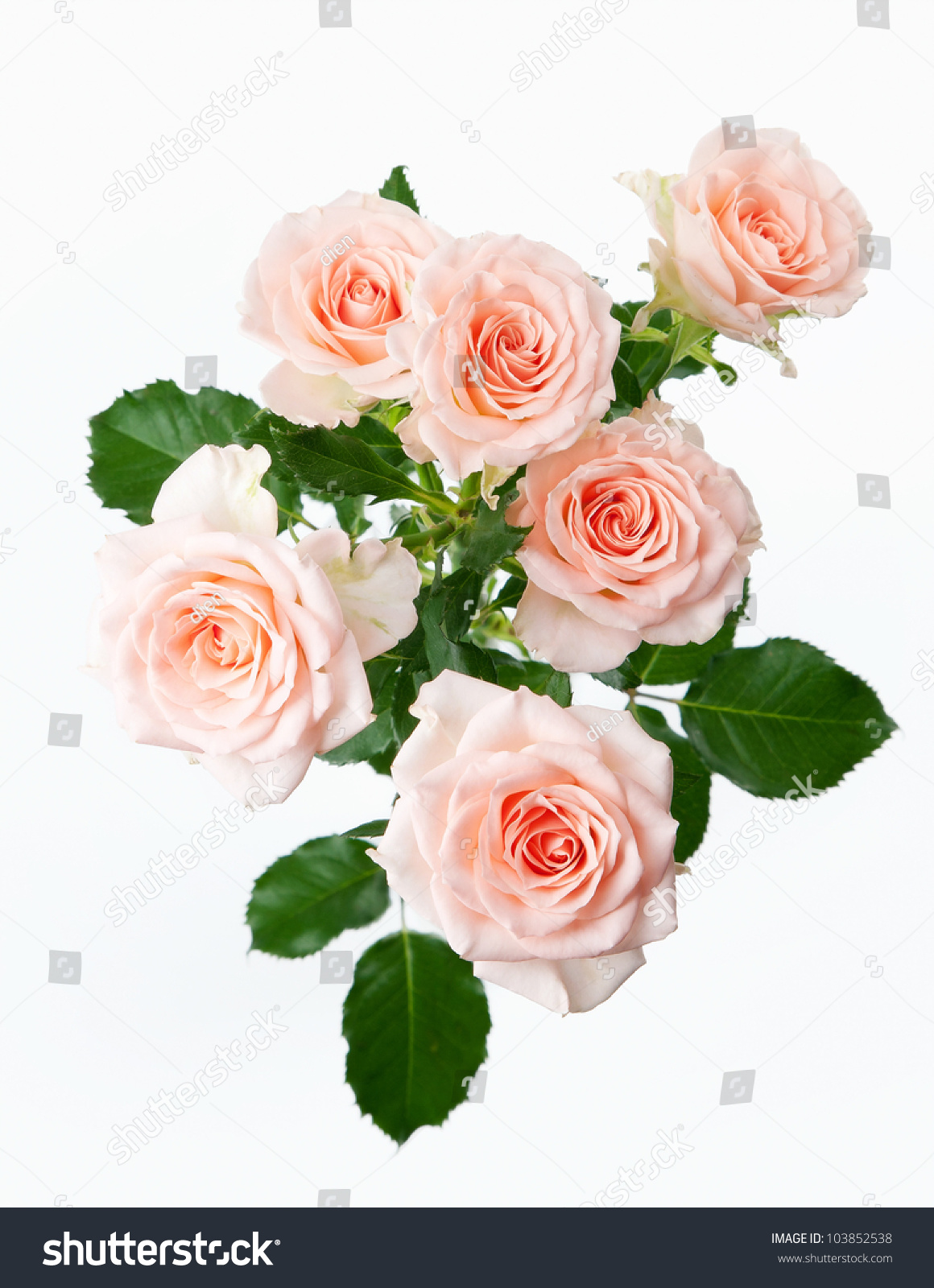 Bunch Rose Flowers On White Background Stock Photo ...