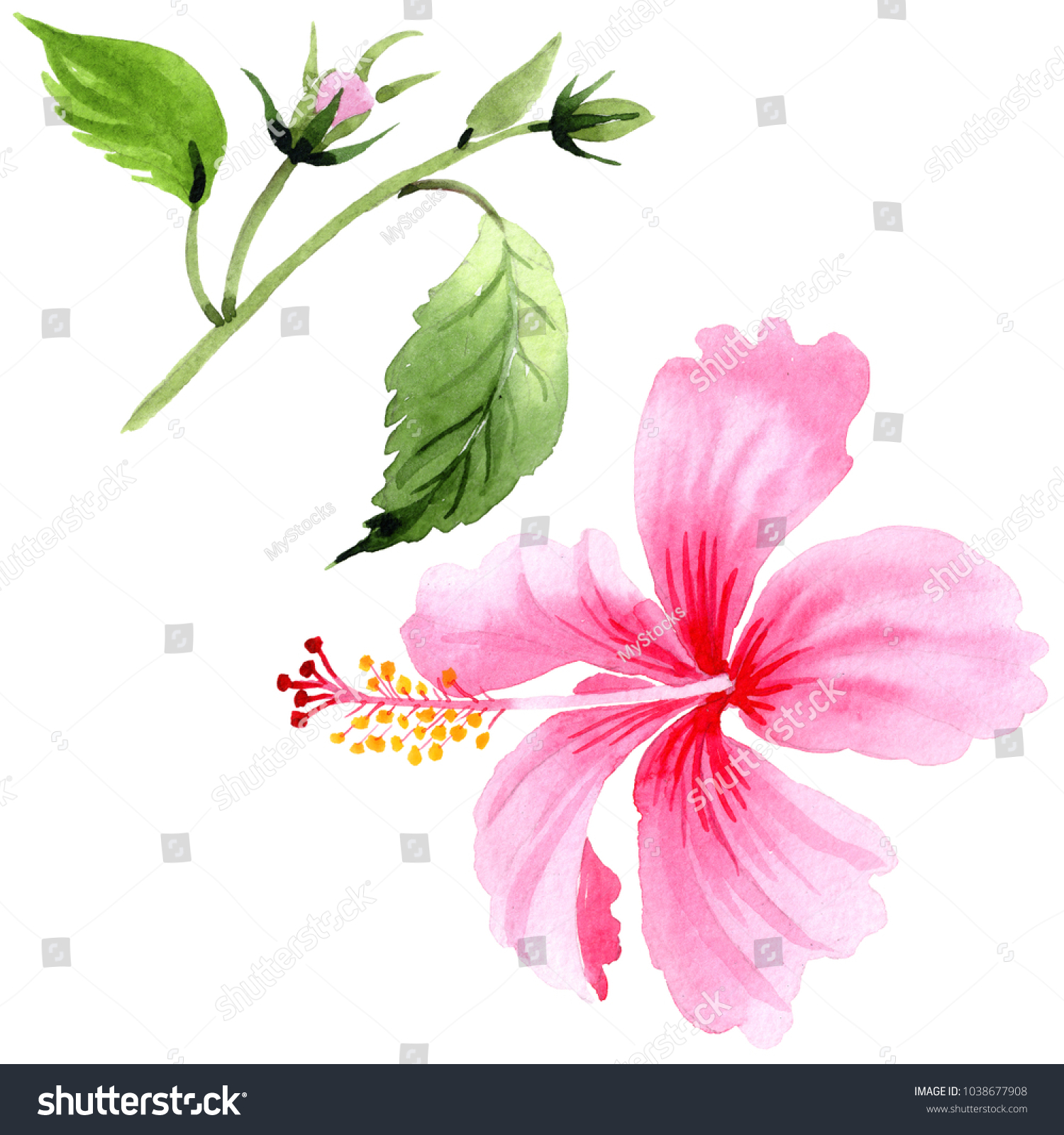Wildflower hibiscus pink flower in a watercolor style isolated full wildflower hibiscus pink flower in a watercolor style isolated full name of the plant hibiscus aquarelle wild flower for background texture izmirmasajfo