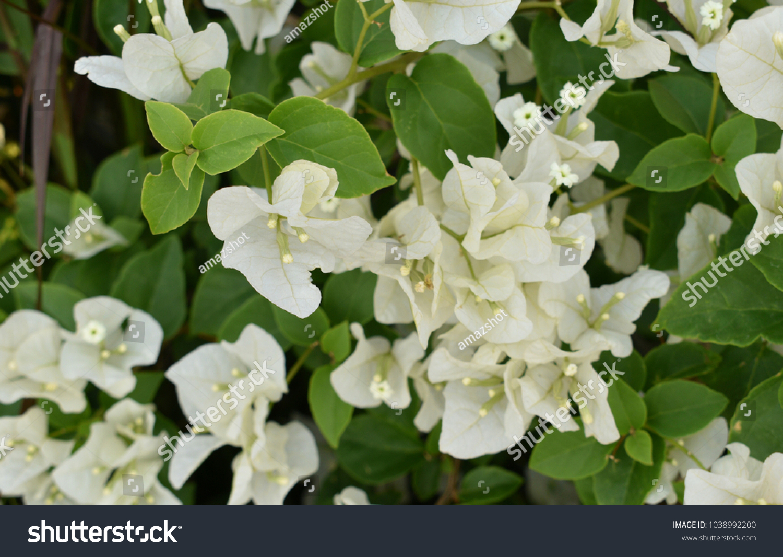 Beautiful white flowers ez canvas id 1038992200 izmirmasajfo
