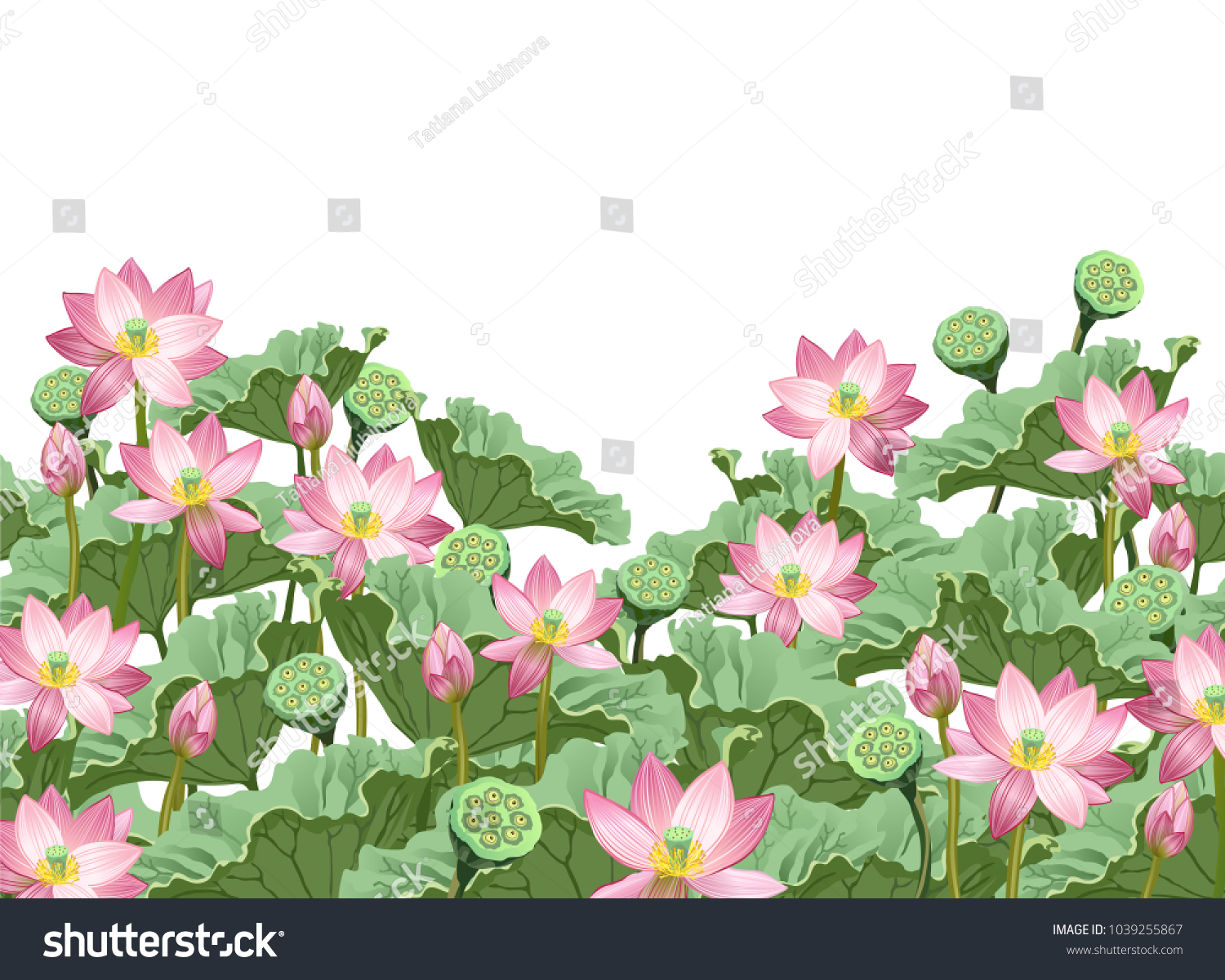 Lotus Flowers Leaves Seed Pods Hand Stock Vector Royalty Free